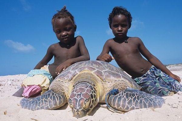 L'île de Madagascar se caractérise par la richesse de sa biodiversité