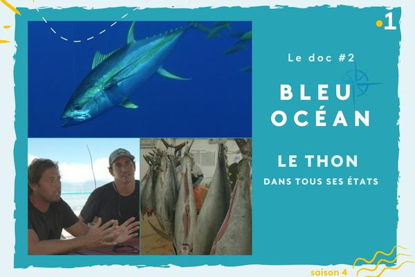 Bleu Océan, le doc #2 : le thon dans tous ses états