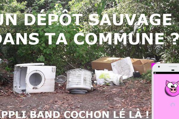 band cochon