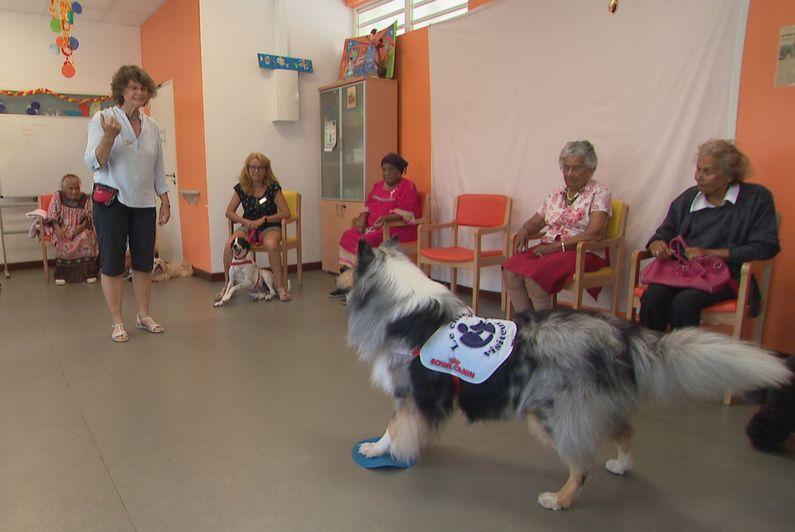 Les « chiens visiteurs » pour aider les malades d'Alzheimer