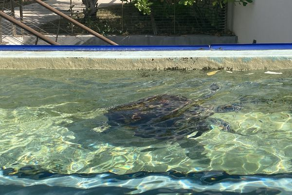 23eme édition des journées réunionnaises des tortues marines à Kélonia