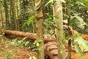 Gestion du bois : une nouvelle certification contestée