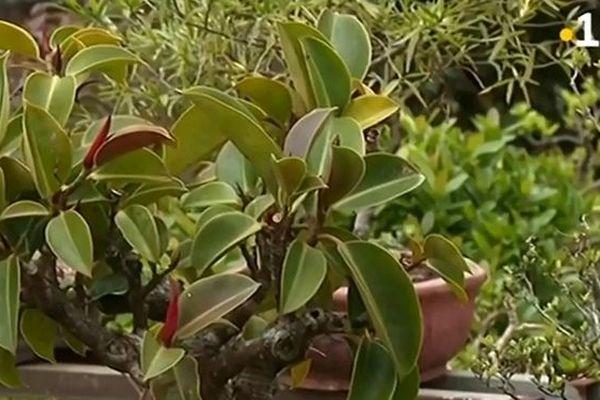 Alon Bat'karé : Les Makes jardin des bonsaïs