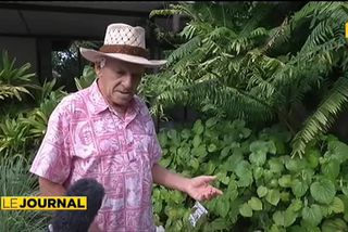 Les jardins du musée de Tahiti redessinés