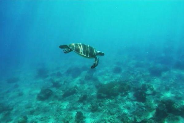balisage tortues