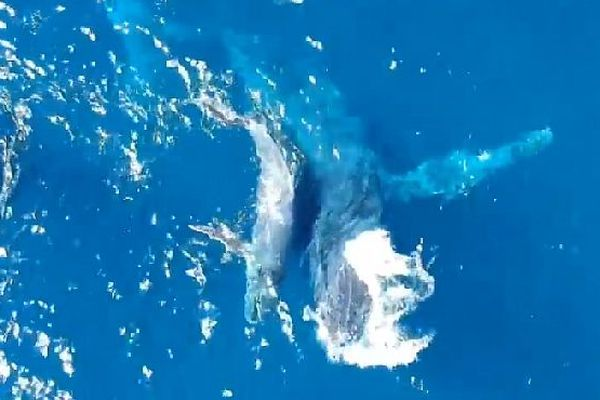 Baleine, son baleineau septembre 2018