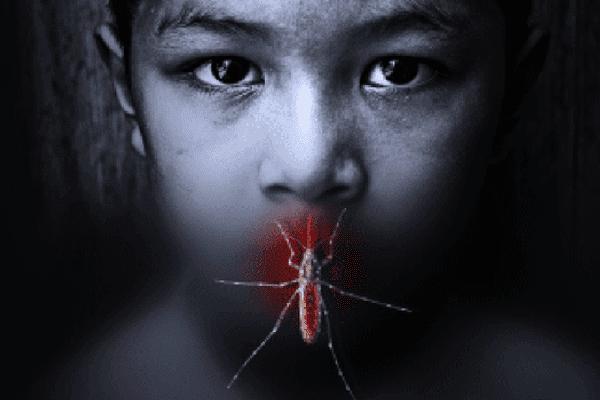 dengue NC