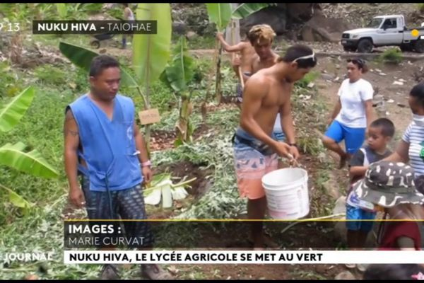 La filière agricole du CED de Nuku Hiva se développe