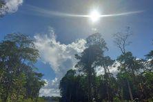 Paysage de Guyane en saison sèche