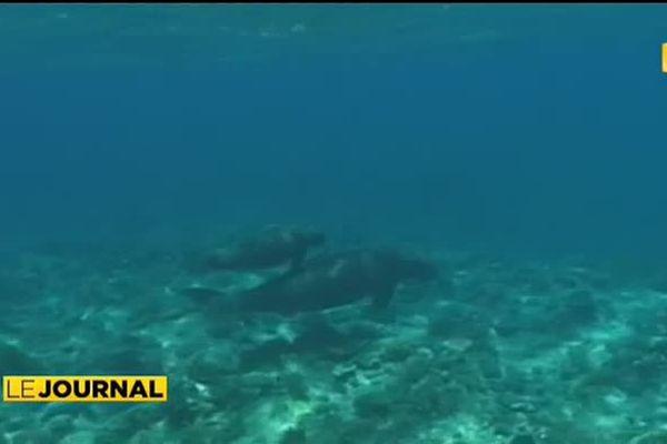Nouvelle Calédonie : au royaume des Dugongs