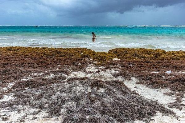 Les algues sargasses sur la plage de Tulum au Mexique en février 2018.