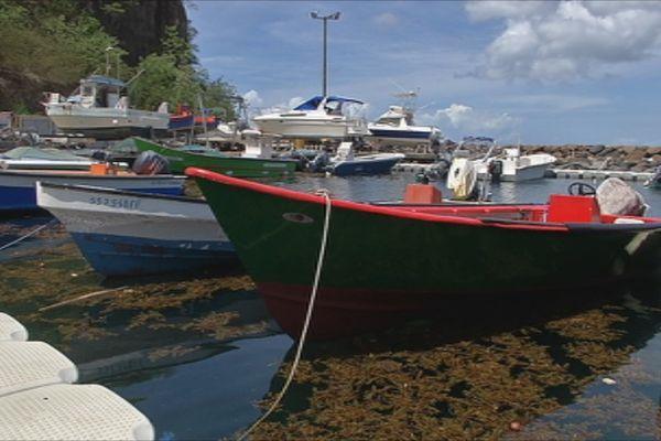 Des yoles de pêche et des algues sargasses dans le port de Case-Pilote