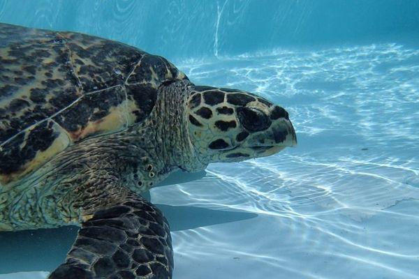Bellavista la tortue