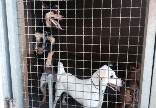 SPA : chiens...