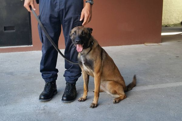 Jipsy chien policier