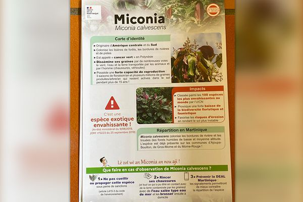 Affiche éradication Miconia