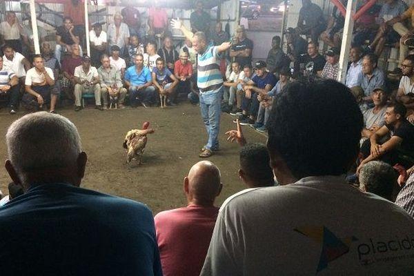 Les Batay kok, un rendez-vous de passionnés