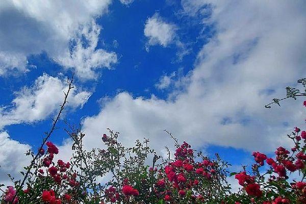Des fleurs sous des nuages bienvenus en nov 2020