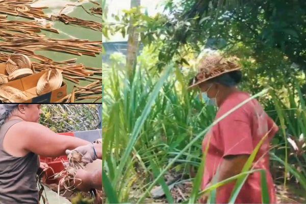 Taha'a : les pandanus du jardin secret de mama Tumarere