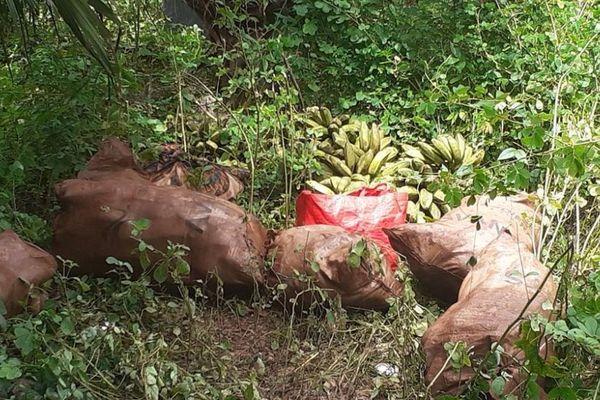 sacs bananes maniocs