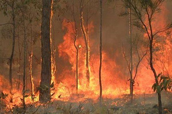 Incendie dans le bush