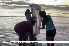 Une fois par an, la pêche aux inaa fait le bonheur des habitants de Takaroa