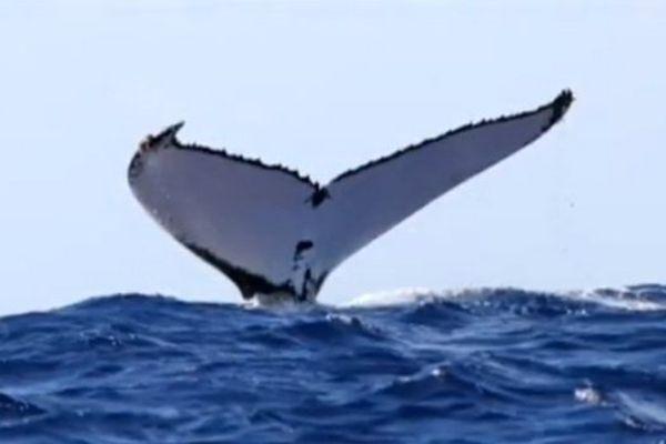 20140610 Baleine