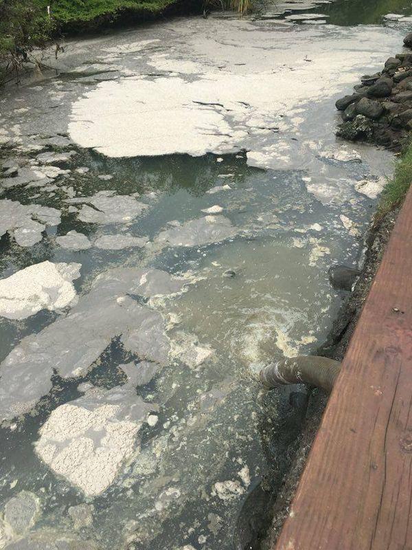 Rivière Papeava 2