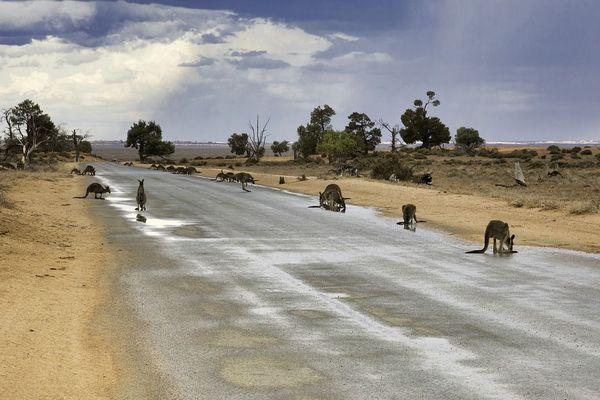 Australie : baisse de la production agricole en raison de la sécheresse