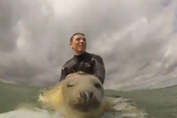 Phoque surf