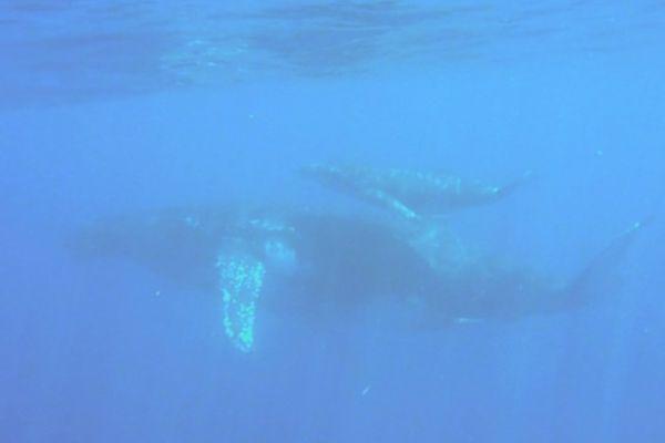 Plongée dans le lagon avec les baleines