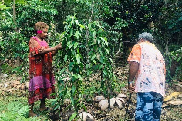 Visite de la plantation de vanille de la tribu de Bayes à Poindimié