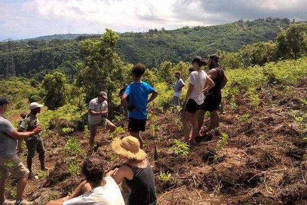 Replantation arbres endémiques Life + forêt sèche Grande chaloupe PArc National 120119
