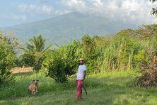 L'agriculteur Lennox Lampkin, sur son exploitation agricole près du volcan la soufrière à Saint-Vincent que nous avions rencontré lors d'un récent reportage.