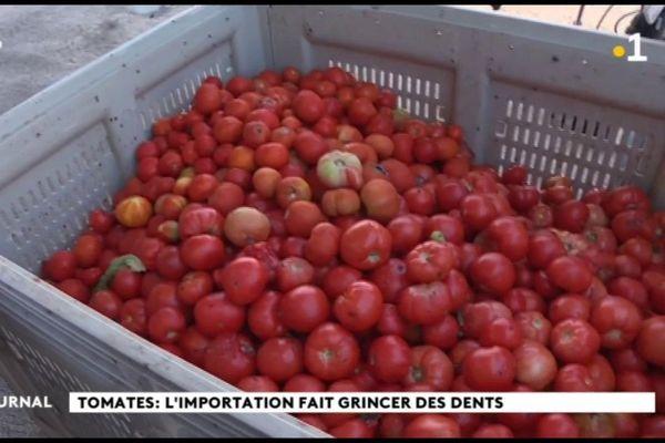 Tomates : le premier producteur du pays voit rouge