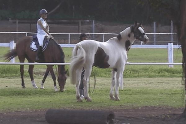 chevaux NZ