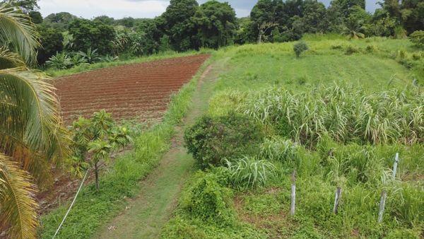 Exploitation agricole d'Ismaël Vouteau, à Capesterre-Belle-Eau