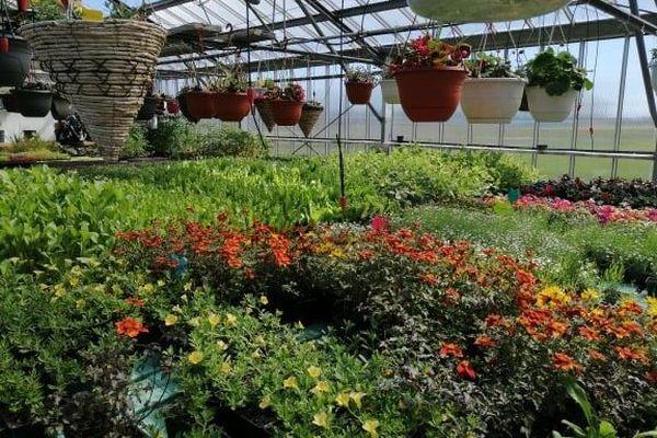Horticulture : les jardiniers amateurs se pressent dans les serres de Miquelon