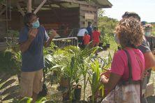 Le nouveau marché aux plantes de Montsinéry dresse ses étals sur le parking du Zoo.
