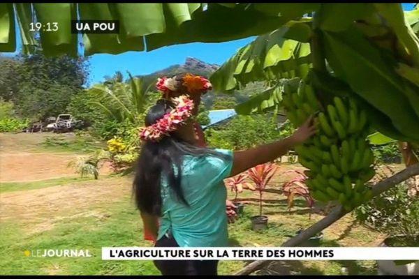 Rencontre avec Annette et Maire, agricultrices à Ua Pou