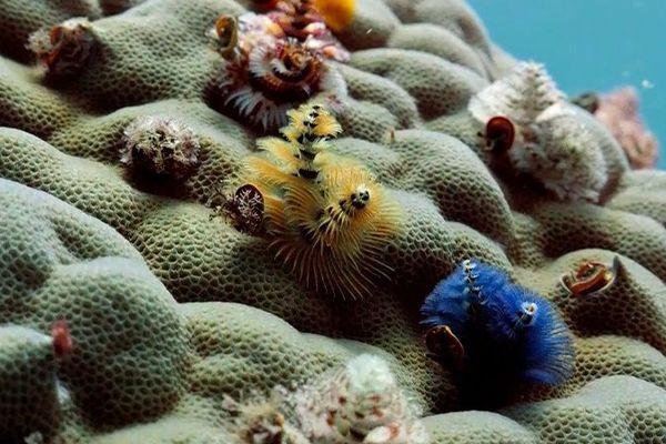 Nouvelle-Calédonie, l'île sauvage