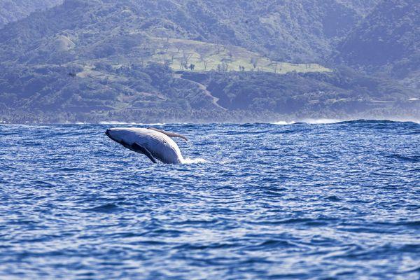 Baleine Vairao 6