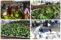 Le méga-marché de Fort-de-France a valorisé pendant trois jours les produits frais agricoles et aidé les producteurs