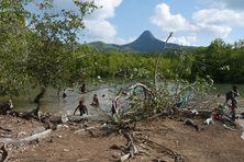 Chirongui marée haute entre cordon littoral et mangrove