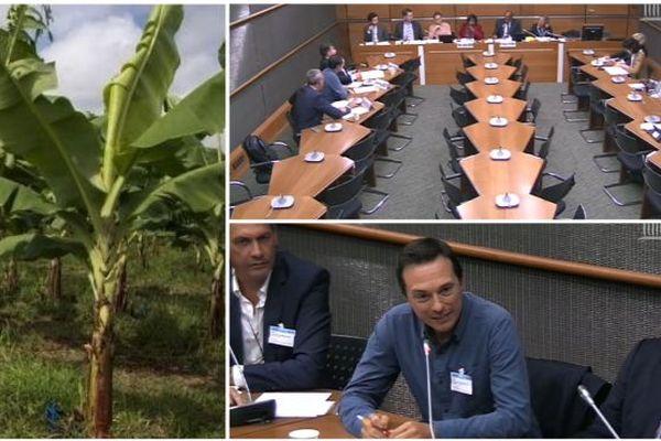 filière banane auditionnée par la commission d'enquête