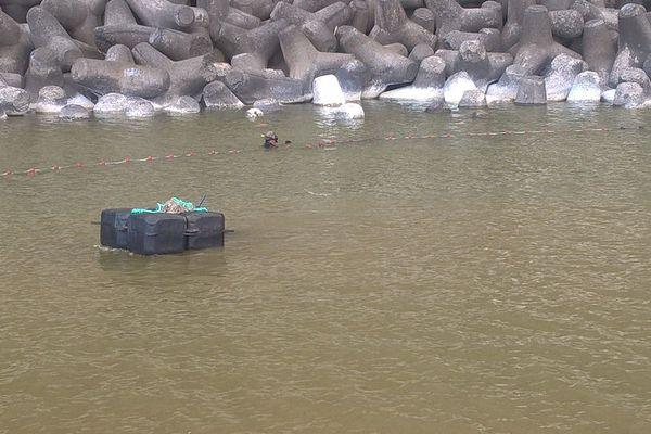 Opération capture Requin NRL