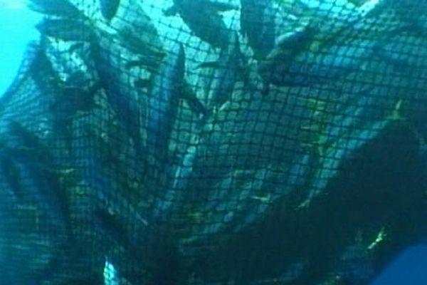 La pêche au thon