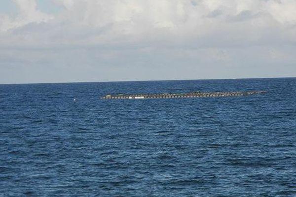 L'aquaculture à Longoni