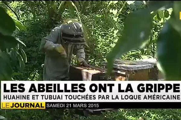 LES ABEILLES ONT LA GRIPPE : Huahine et Tubuai touchées par la loque américaine
