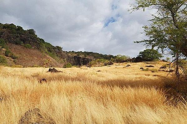 Savane de Plateau-Caillou mars 2020